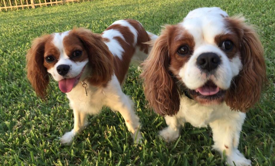 Meet Callie & Chase